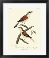 Framed Vintage French Birds I