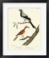 Framed Vintage French Birds II
