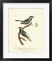 Framed Vintage French Birds III