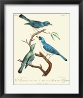 Framed Vintage French Birds IV