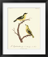Framed Vintage French Birds V