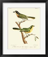 Framed Vintage French Birds VI