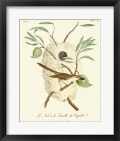 Framed Vintage French Birds VII