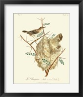 Framed Vintage French Birds VIII