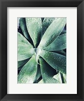 Framed Green Tropical Succulent III