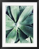 Framed Green Tropical Succulent III
