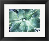 Framed Green Tropical Succulent VII