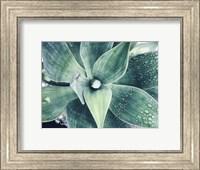 Framed Green Tropical Succulent VIII