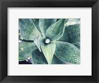 Framed Green Tropical Succulent VIII