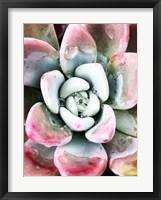 Framed Pastel Succulent Beauty V
