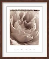 Framed Delicate Rose