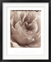 Framed Delicate Rose