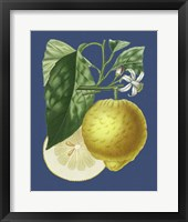 Framed French Lemon on Navy I