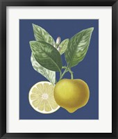 Framed French Lemon on Navy II