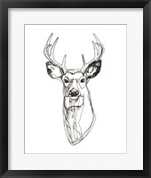 Framed Whitetail Wireframe II