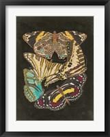 Framed Winged Patterns I