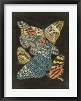 Framed Winged Patterns II