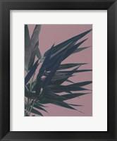 Framed Bamboo Pink I