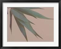 Framed Bamboo Pink IV