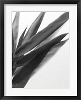 Framed B&W Bamboo I