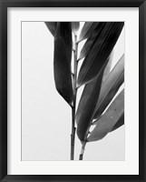 Framed B&W Bamboo II