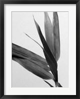 Framed B&W Bamboo III