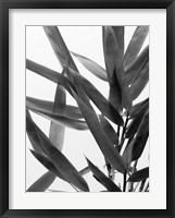 Framed B&W Bamboo IV
