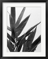Framed B&W Bamboo V