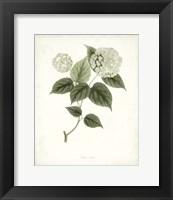Framed Sage Botanical I