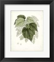 Framed Sage Botanical III