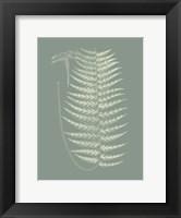 Framed Ferns on Sage VIII