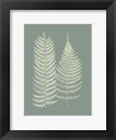 Framed Ferns on Sage IX