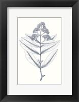 Framed Indigo Botany Study I