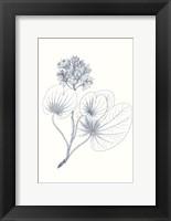 Framed Indigo Botany Study IV