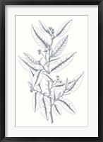 Framed Indigo Botany Study V