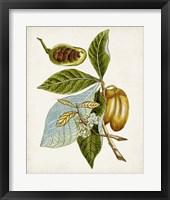 Framed Antique Botanical Study VI