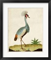 Framed Heron Portrait I