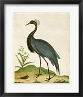 Framed Heron Portrait II