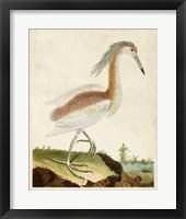 Framed Heron Portrait III