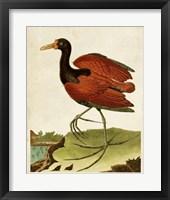 Framed Heron Portrait IV