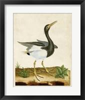 Framed Heron Portrait V