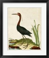 Framed Heron Portrait VI