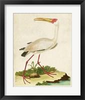 Framed Heron Portrait VII