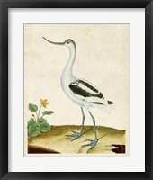Framed Heron Portrait VIII