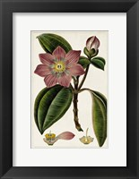 Framed Mauve Botanicals VI