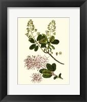 Framed Olive Greenery I