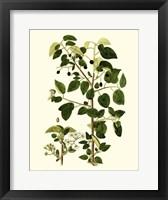 Framed Olive Greenery V