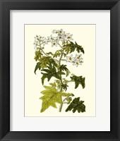 Framed Olive Greenery VI