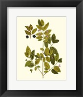 Framed Olive Greenery VII