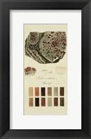 Framed Species of Lichen I